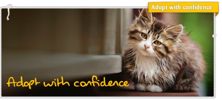 Frome Cats Protection - Adopt With Confidence