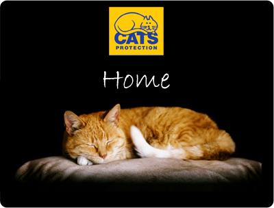 Adoption - Fluffy cat sleeping on cushion