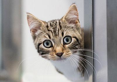 newsletter cat