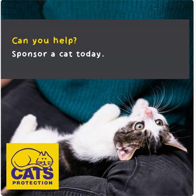 Sponsor a cat - kitten on a lap