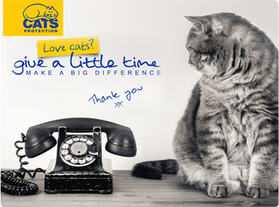 Volunteer page - Fluffy cat looking at telephone