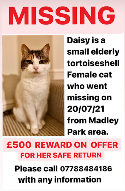 Poster about missing cat