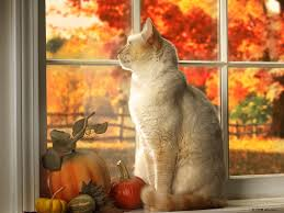 Cat sitting in a window with autumn leaves behind it