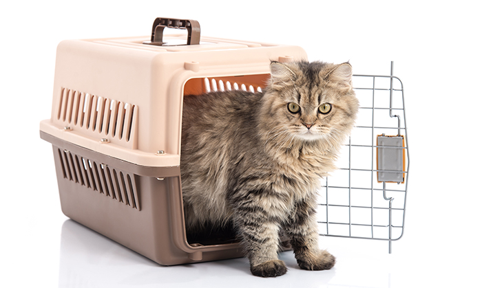 Cat carrier with cat