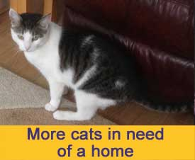 More cats in need of a home
