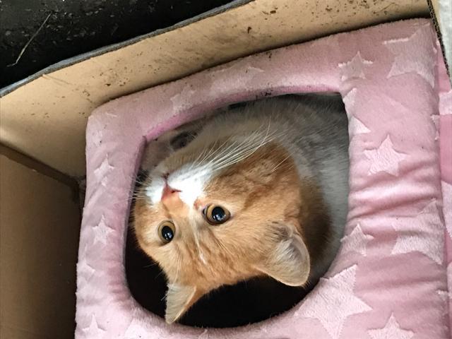 Found cat February 2021