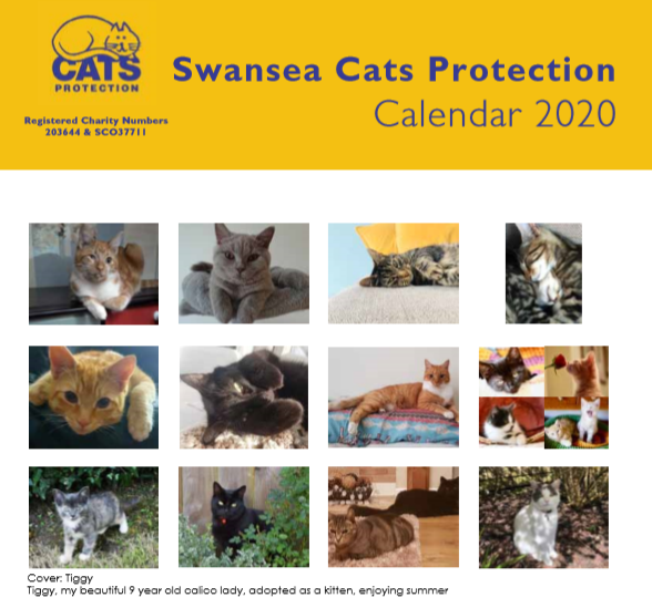 2020 Calendars Buy From The Cats Protection Charity Gift Shop