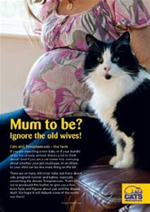 cats  and pregnancy