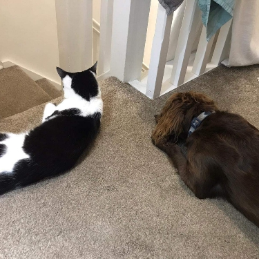 Stella and friend