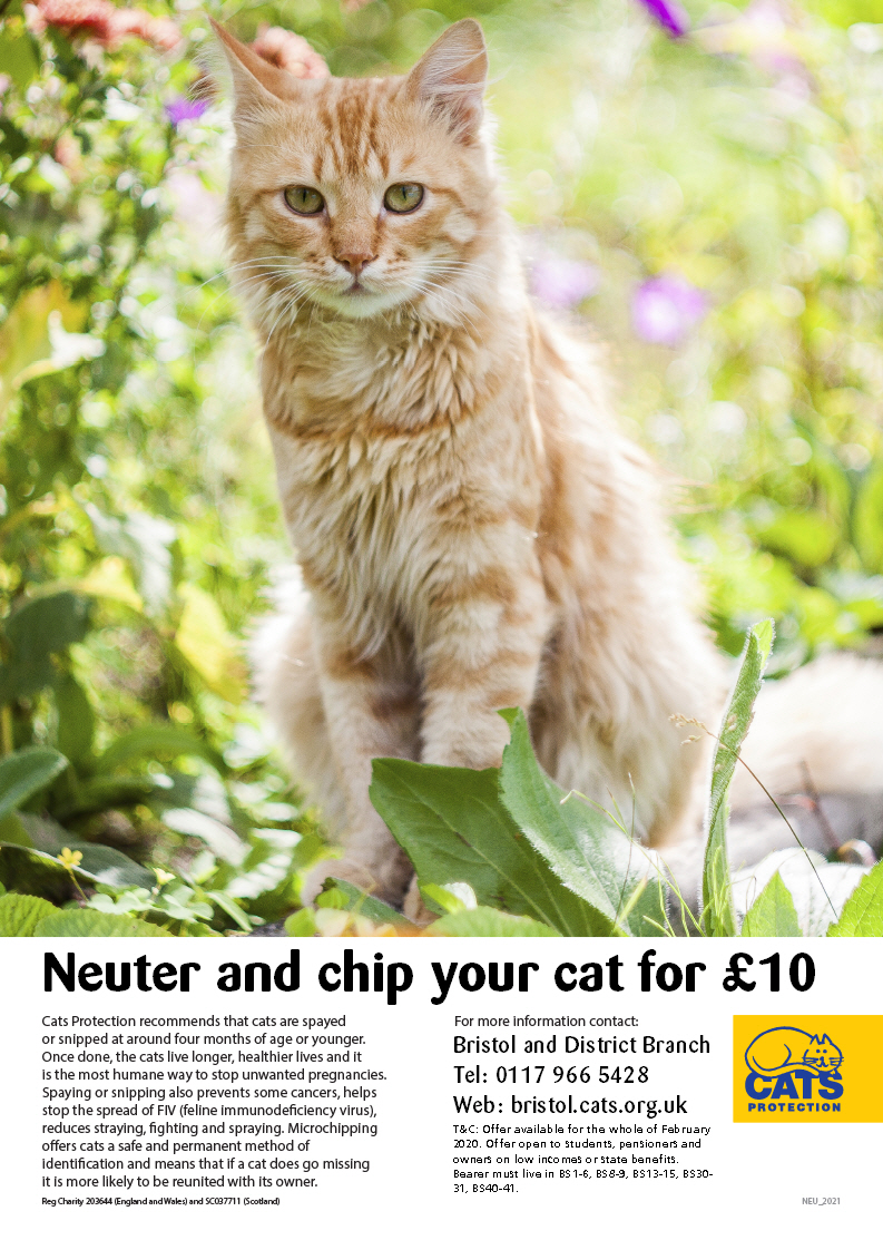 Snip and Chip for £10 February 2020 Poster