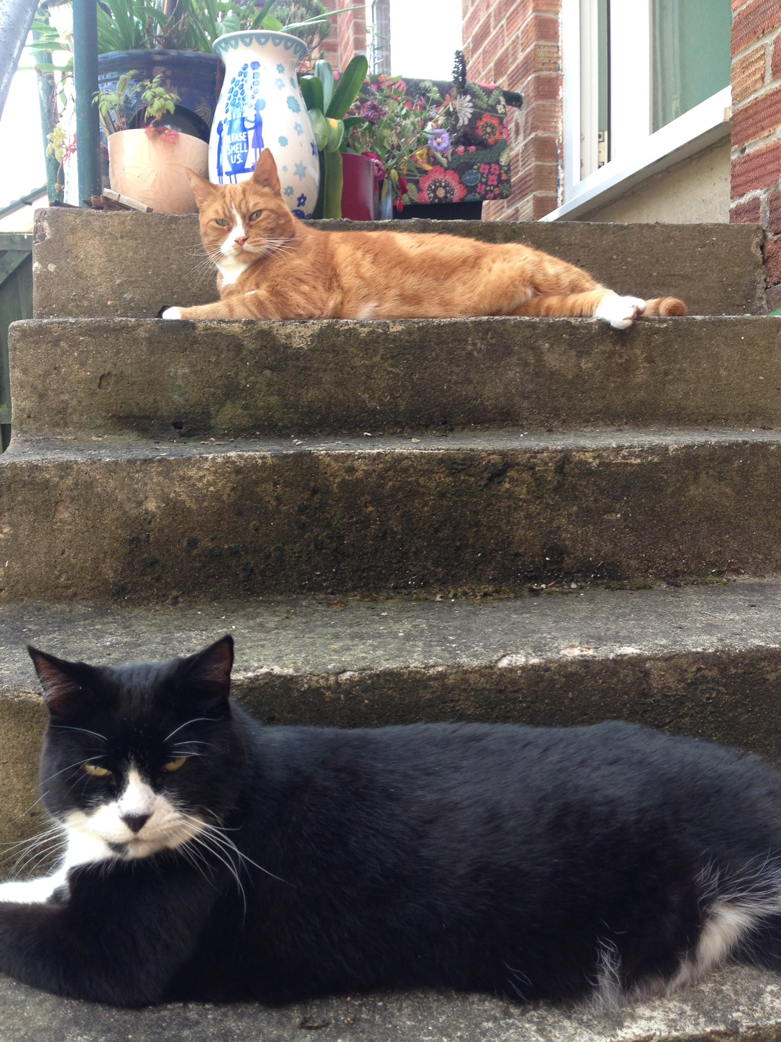 Chester and Kiwi on steps
