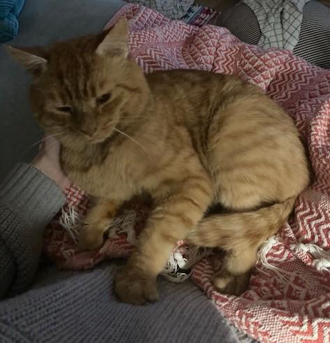 Ginger cat Jasper
