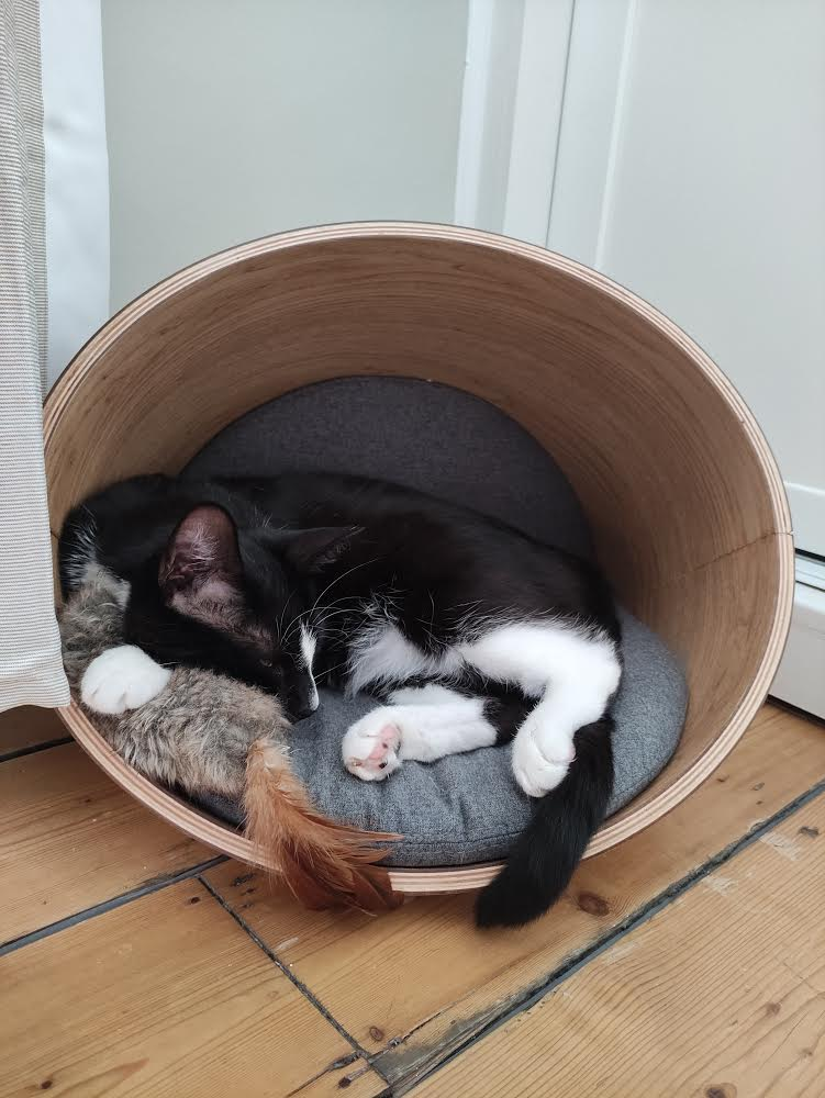 Monty, black and white cat, curled up