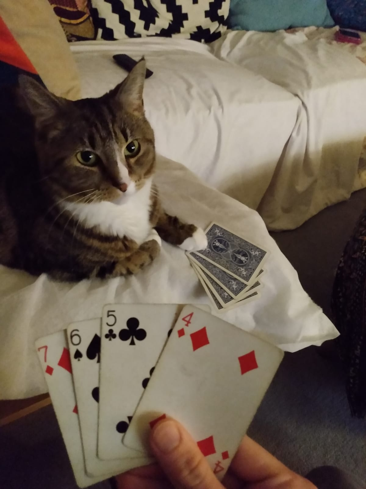 Prince with a card game
