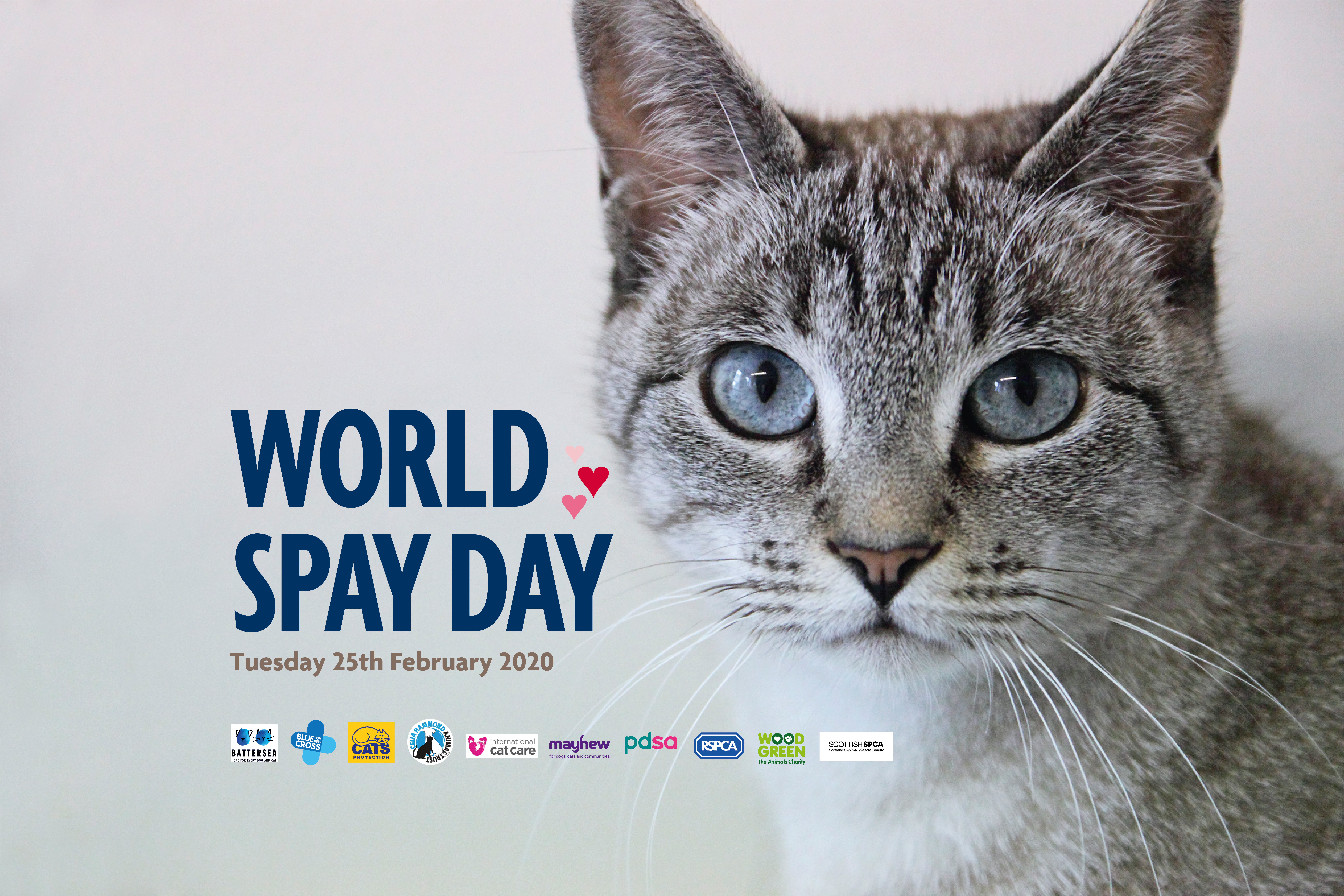 World Spay Day 2020