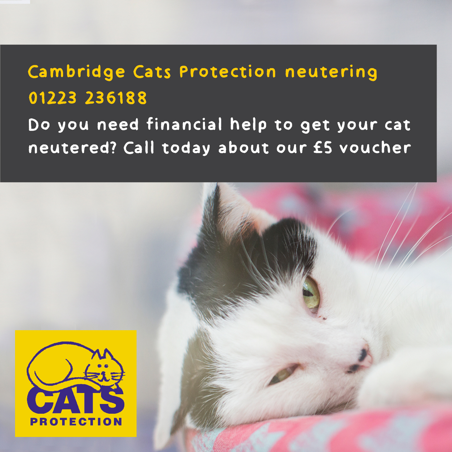 Cambridge neuter helpline 01223 236188