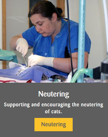 Neutering - advice link
